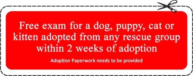Rescue group free exam coupon